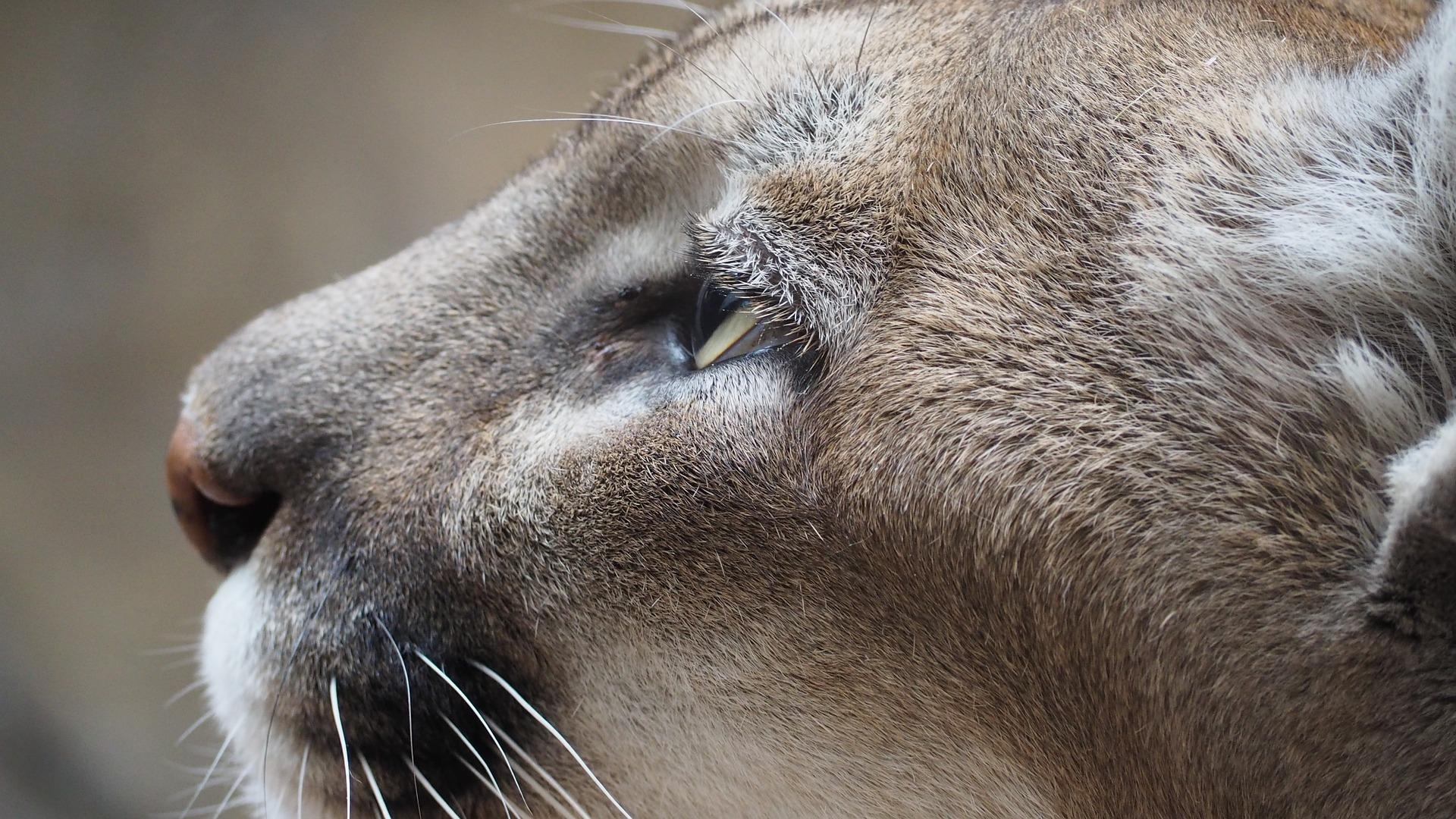 communi-cat
